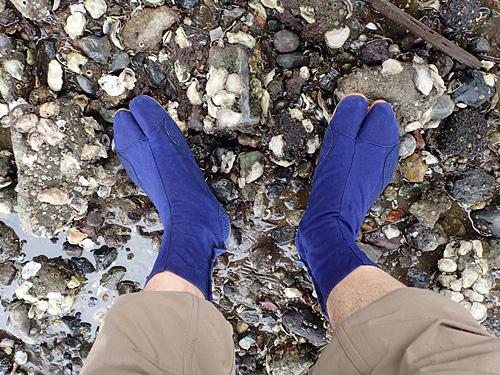 干潟の正装、それは地下足袋。