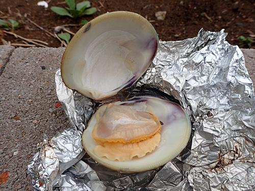 アルミホイルにしっかりと包んで、そのまま直火で焼くと、貝の汁で蒸し焼きになってうまいよ。