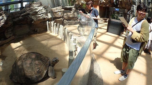 他にも爬虫類館がおすすめと言っていました(あまり動かないから)。
