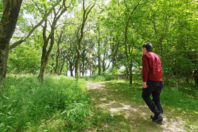なんとなく厳しそうな被写体が分かっているので、こういう森があると近づきたくなる