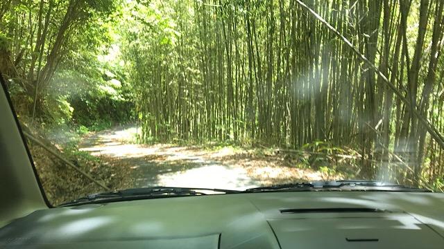 竹林を通り抜けた先に