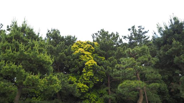 背後の森、数十匹、いや数百匹くらい鳥がいそう