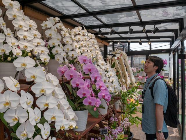 ハウスに併設された売店には寄せ植えされた胡蝶蘭が並ぶ。会社でよく見るあれだ! 背筋も伸びる。