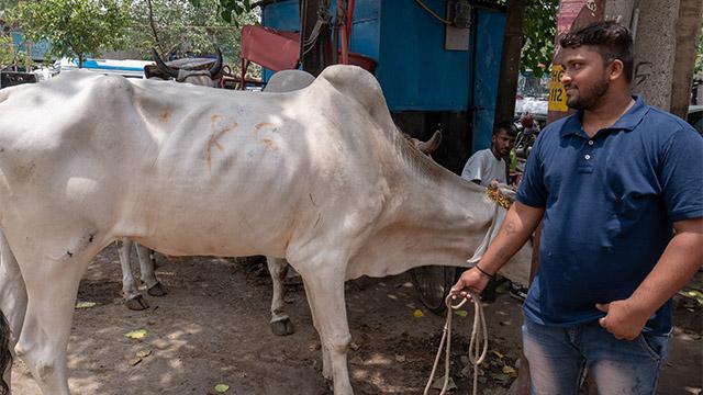なんだか肩のところがぼっこりしている。最新モデルの牛か?