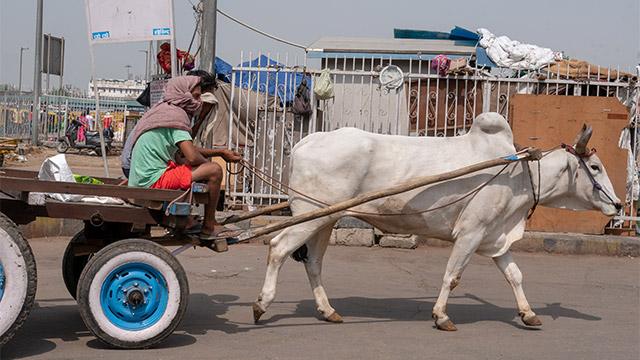 違うところで見た牛も。あそこに引っ掛けてる? そんなに便利になっていいのか。