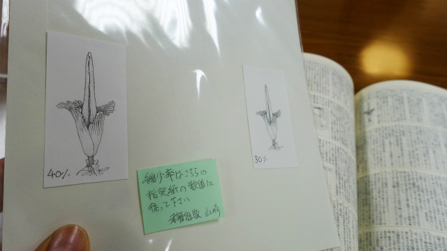縮小コピーされた絵は、原画の後ろに参考として貼ってある。