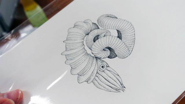 ニッポニテス