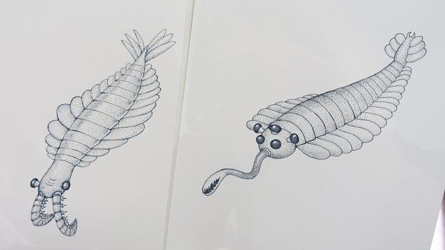 アノマロカリス(左)とオパビニア(右)の原画