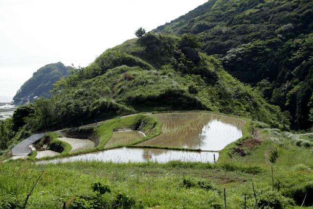 棚田の中にこんもり鎮座する丸尾山、確かに聖地にしたくなるような特徴的な地形だ