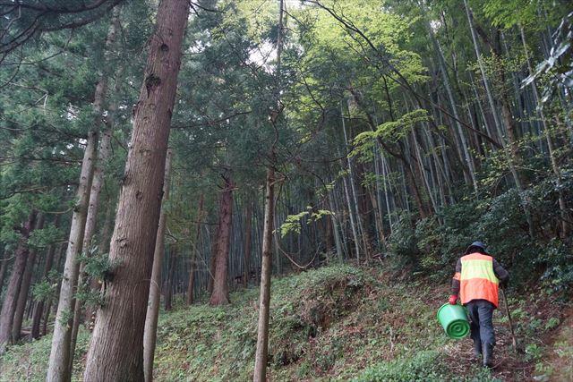 竹林に!…都会育ちには新鮮ですわ。