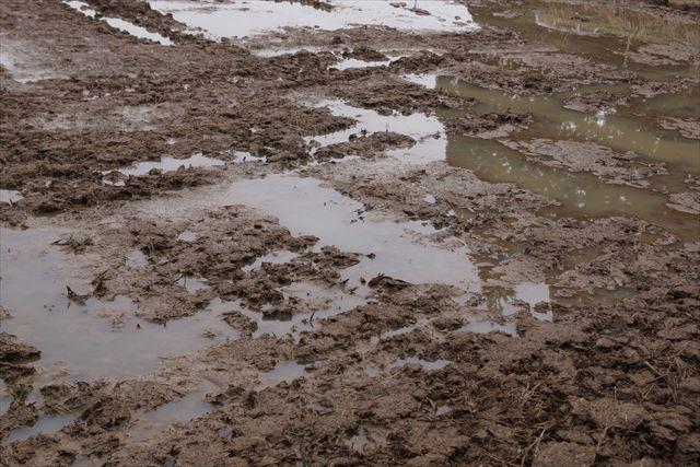 こんな泥んこはイノシシにとって最高のバスルーム。