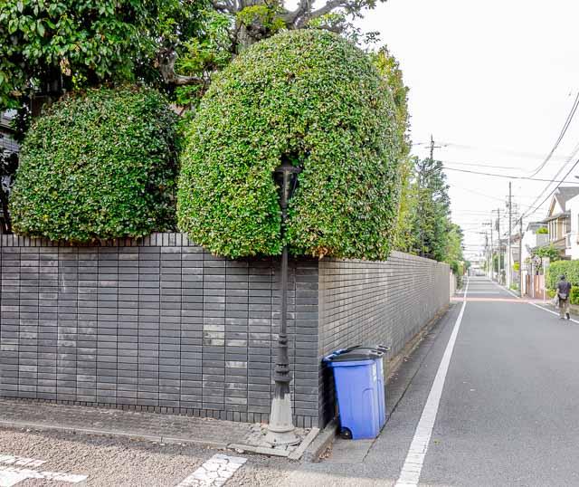 塀から大きく飛び出した植栽。きれいに刈り込まれているだけに、街灯の食い込みっぷりが際立つ。