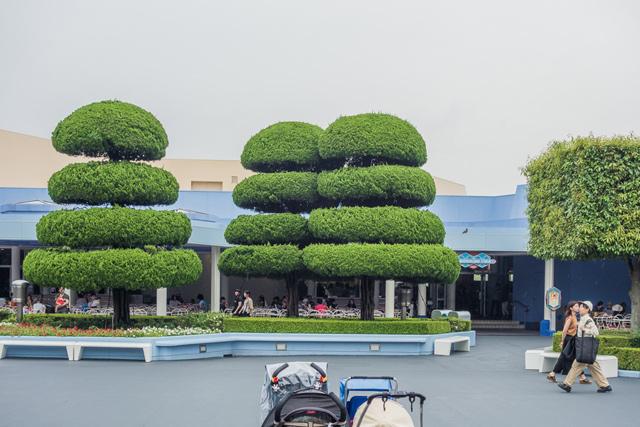 つねづね、ディズニーランドの植栽はその整えられっぷりがとても面白いと思っている。