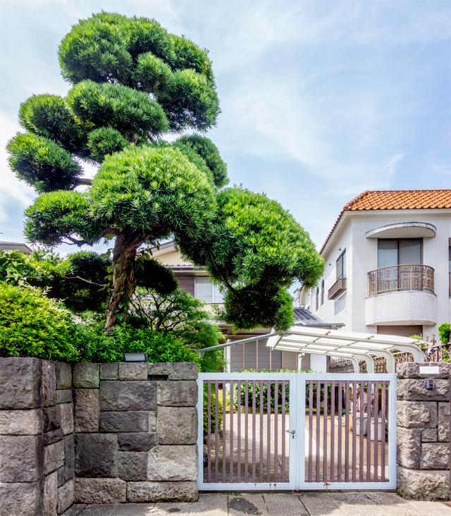 松の位置は間違いない。そして門の上に枝もある。が、これは門かぶりなのだろうか。
