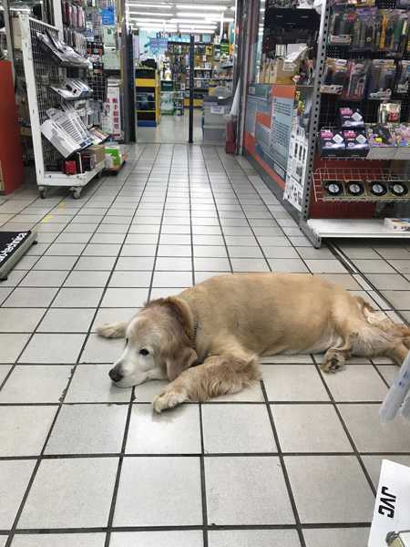 パーツ屋の店内にいるでかい犬