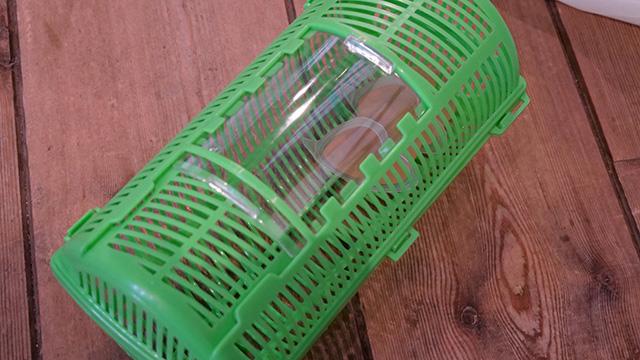 今回は木育を掲げた会社だということで、カブトムシのエサ風に虫かごにゼリーを入れて林に置いておいた