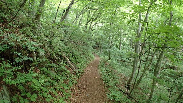 途中で何度か土砂降りになったが、深い森の中なので雨を避けることができました。