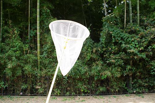 虫捕り網を持って竹林へとやってきた。