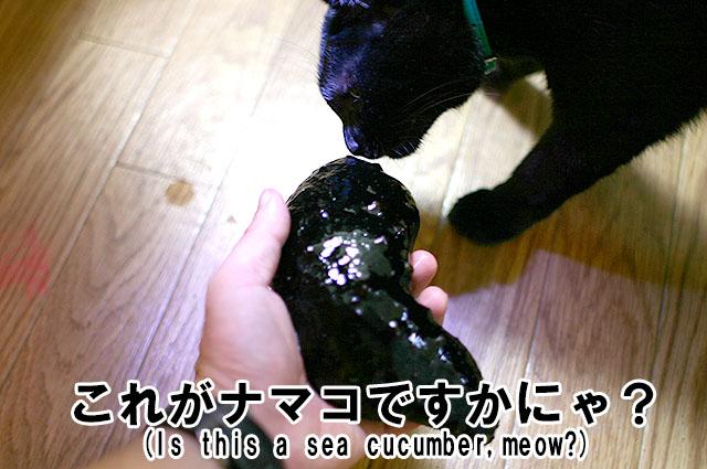 上の黒いのが猫。下の黒いのがナマコ。黒ミーツ黒。