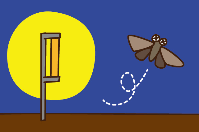 一晩中太陽に近い光を放って蛾を追い払う。