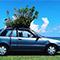 車の屋根から木が!沖縄のジャングルカー引退