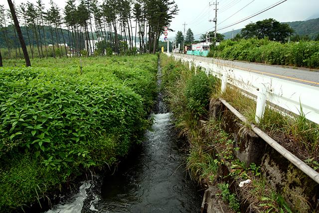 道路沿いの小さな用水路