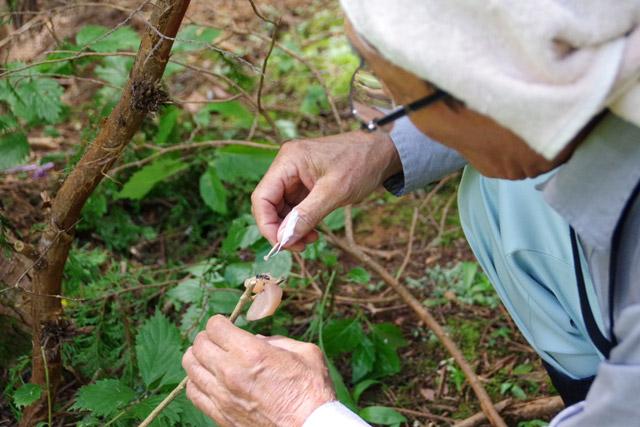 エサに寄ってきたへぼに、爪楊枝で目印付きの肉団子を渡す。当然のように素手だ。