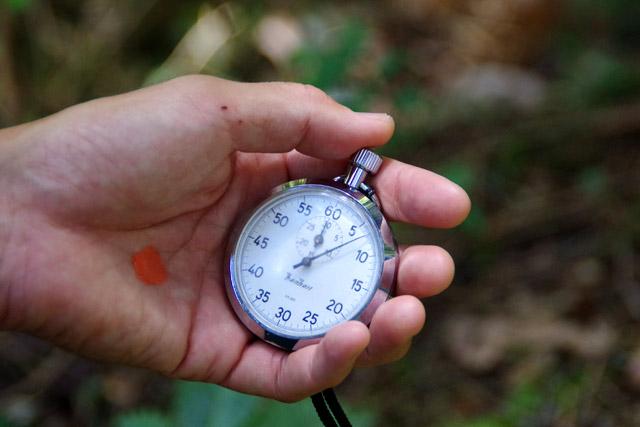 へぼが往復する時間を計測して、一番近い巣を探すという頭脳プレイ。