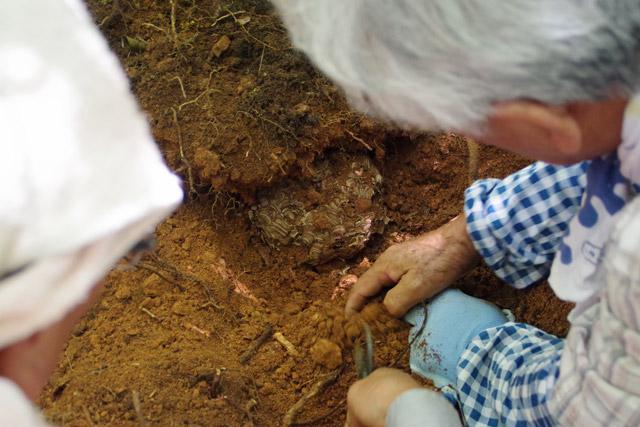 土の中から巣が出てくるのがとっても不思議。