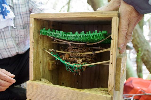 このように取り出した巣を固定する。巣箱の素材や内部構造は、へぼハンターごとに独自のこだわりがあるのだろう。