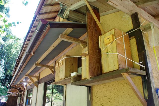 あらゆるスペースに巣箱が置かれている岩井邸。