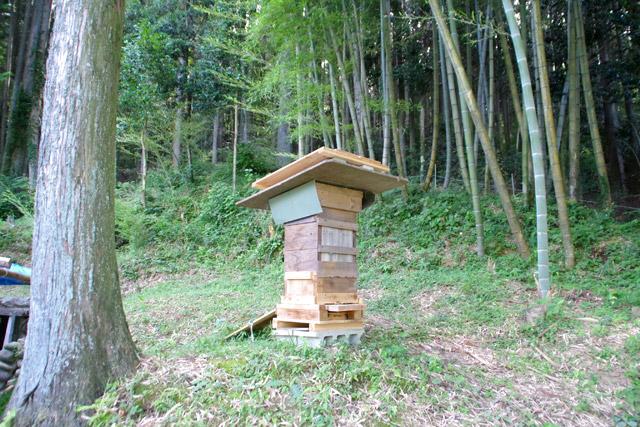 へぼだけではなく、ニホンミツバチの巣箱もあった。