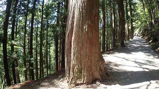 道の真ん中に生えている木にすら大きな力を感じる。