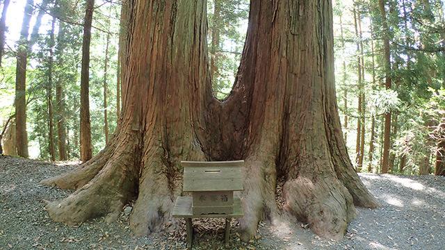 いくつかの木は神としてまつられていました。