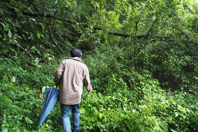 すぐに、うっそうとした茂みに阻まれた。駅を出て30秒でこの景色である