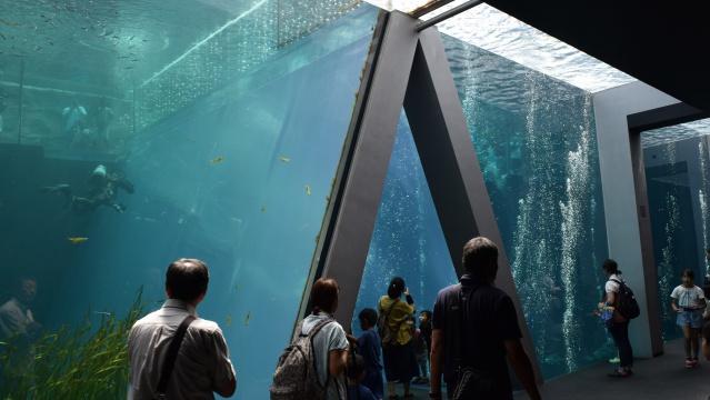 次の日はみんなで水族館に行った。昨日の今日なので全員分の入館料を払いました。