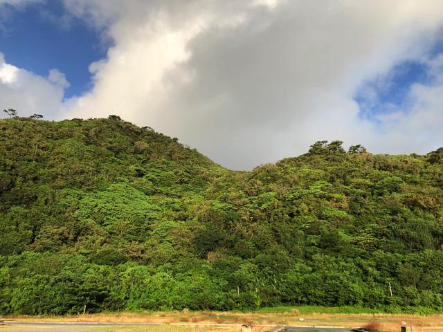 沖縄北部の山林地帯、通称『やんばる』。この地域の方々から「かつてはアカマタを食べていた」という情報をキャッチ。しかしなぜアカマタばかり?
