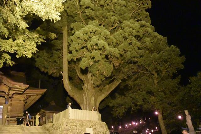 ものすごく大きな杉の木。