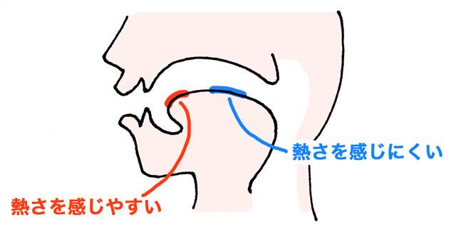 温点は舌の先に集中していて、逆に舌の中央は少ないらしい。