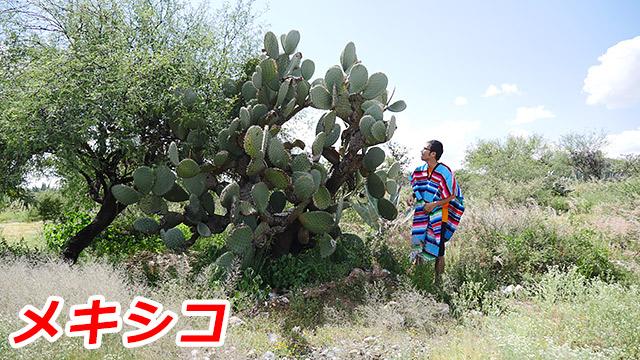 ということで、メキシコに来ちゃいました!