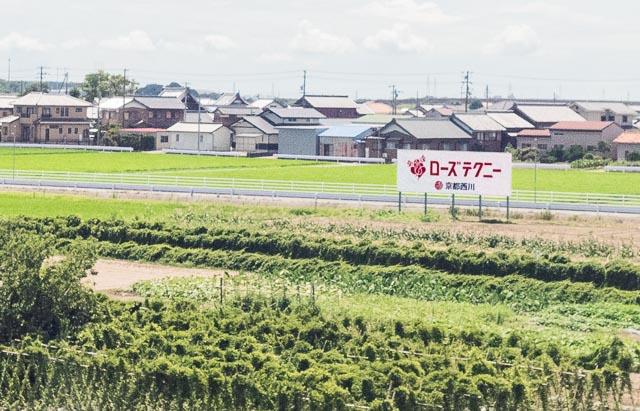 どうやら名古屋までの東日本エリアは「ローズテクニー」が優勢。「727」が野立ってこない。