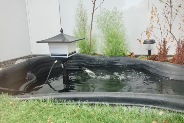 中を覗くとこう。池! もはや庭!