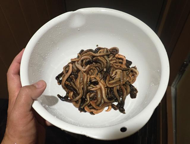 鞘から取り出したエラコをさっと真水で洗い、よく水気を切る。