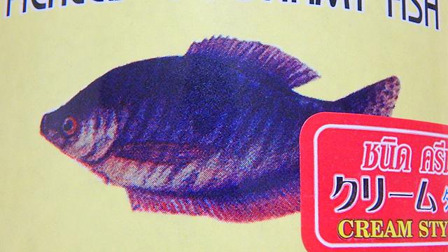 熱帯魚店で買えるらしい。