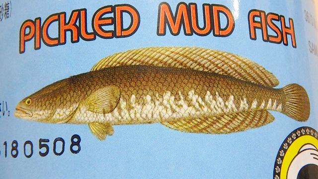 雷魚は泥の中に潜るからMUD FISHなのか?