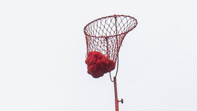 5メートル上空に50個も玉が入ってる。すごい。