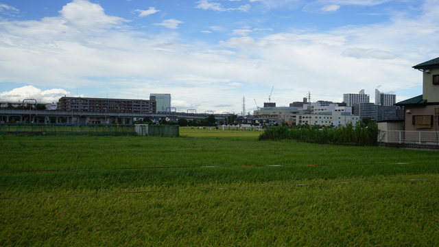 小田急線厚木駅からちょっと歩くと線路沿いは田園風景になる。