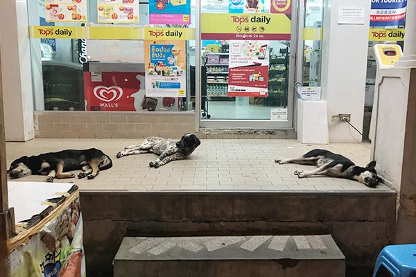 これはそのコンビニを出たところでズラリ並んでた犬(関係ない)