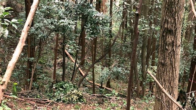 倒木もたくさんあった